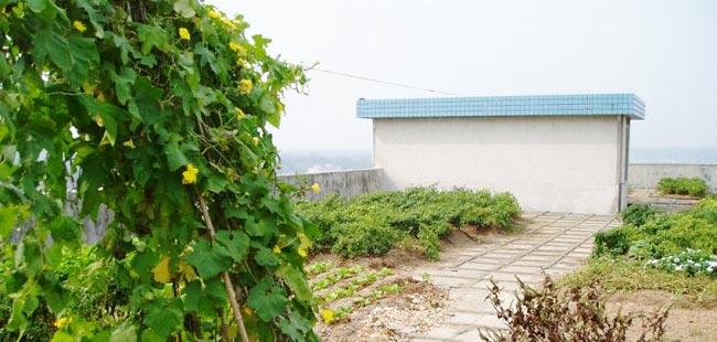 家庭屋顶菜园效果图_菜园介绍广州市顶田环保科技有限公司增城屋