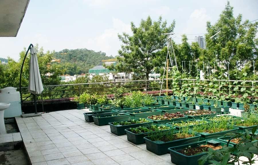 会议商铺展示案例-广州市增城益源苗木场屋顶绿化